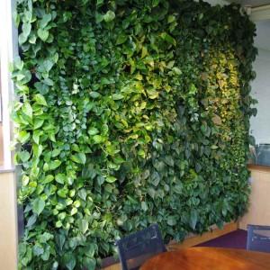 BioArt-sciana-zielona