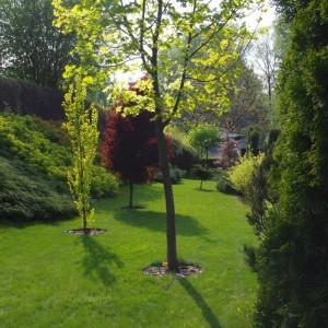 drzewaBioArt1