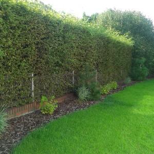 trawnik z siewu BioArt