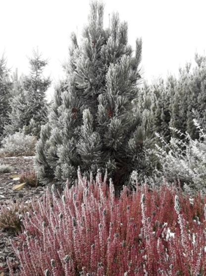 zima w ogrodzie BioArt www